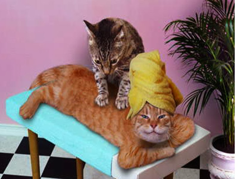 cat salon