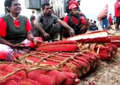 Manfaat Buah Merah Papua Untuk Kesehatan Tubuh