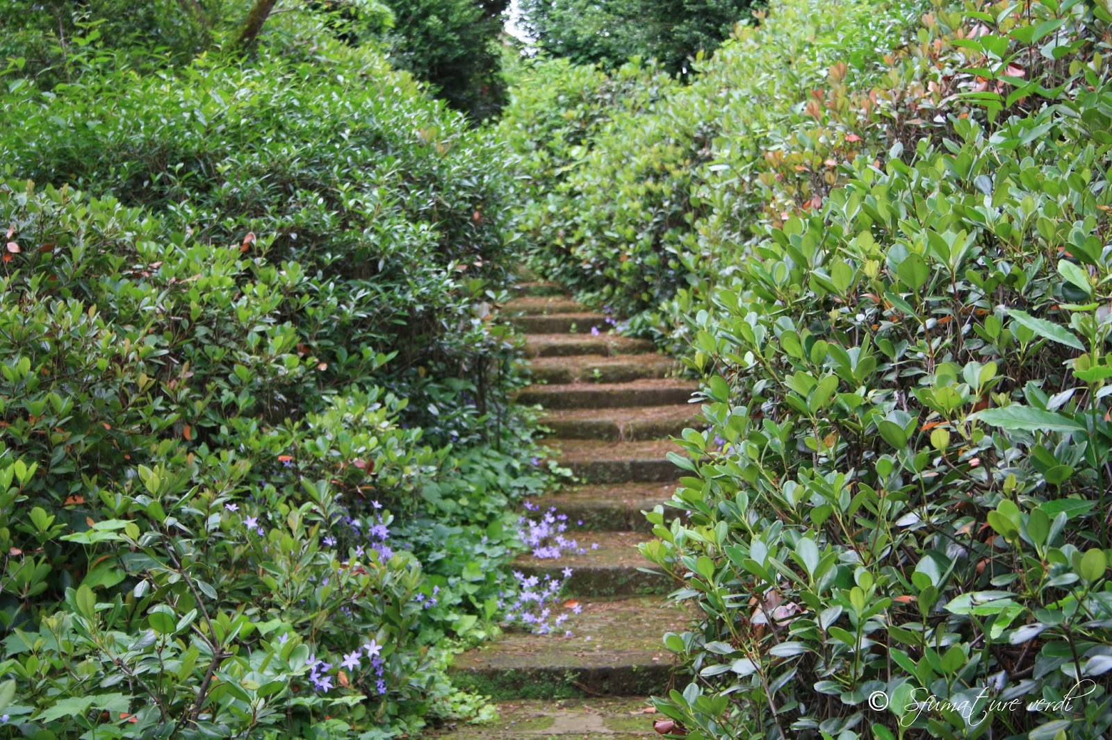 i giardini della landriana | sfumature verdi - Siepe Da Giardino Piccolo