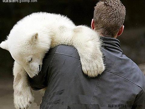北極熊克努特 4歲4