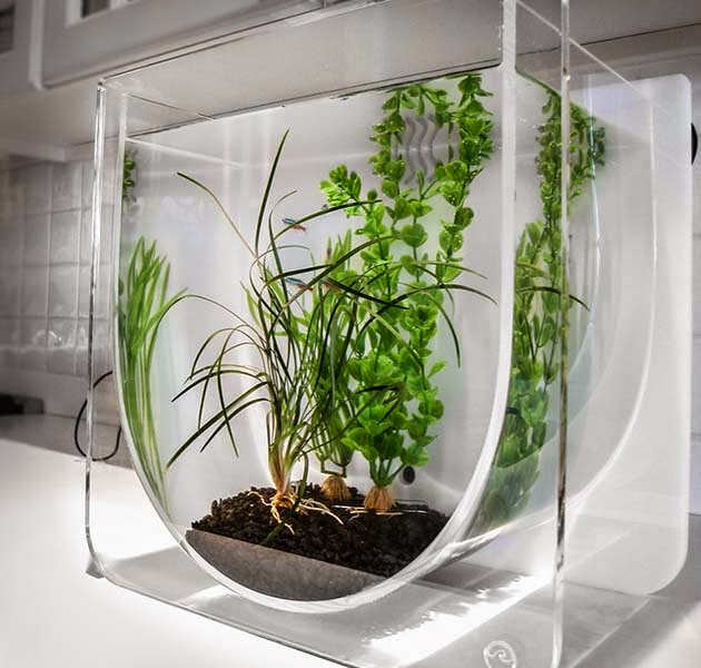 Cube Glass Plant House