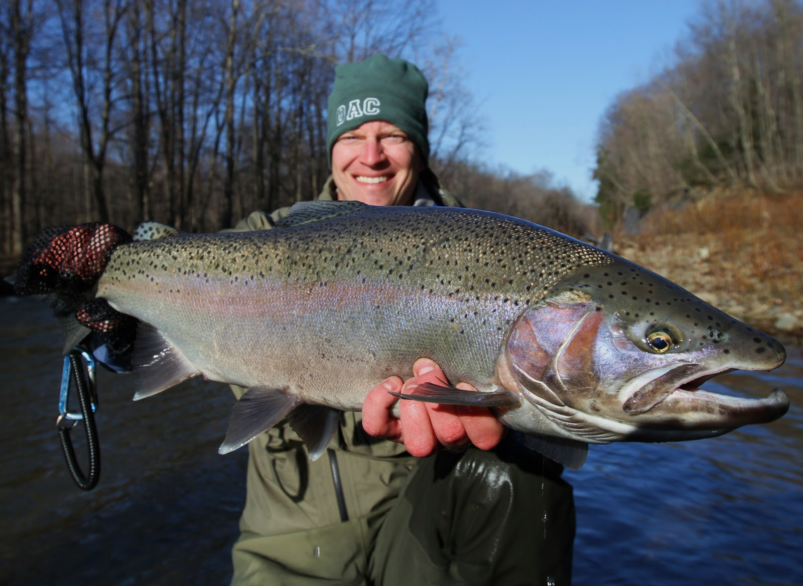 Steelhead alley outfitters lake erie fly fishing guide for Fish steelhead alley