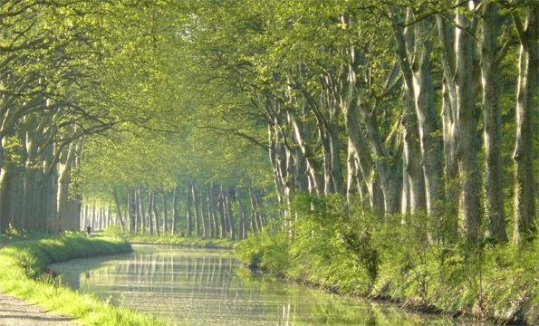 Platanes du Canal du Midi ©VNF
