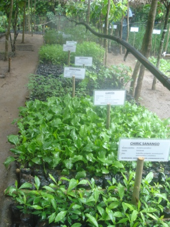proyecto plantas medicinales agosto 2012