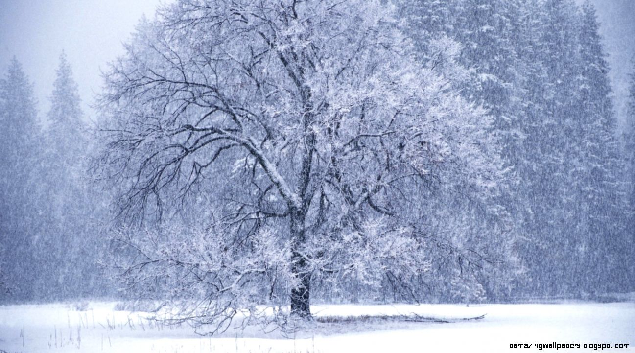 Snow Falling HD desktop wallpaper  High Definition  Fullscreen