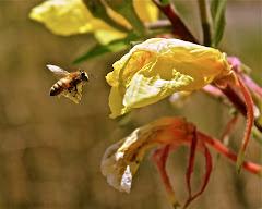 Insect Album