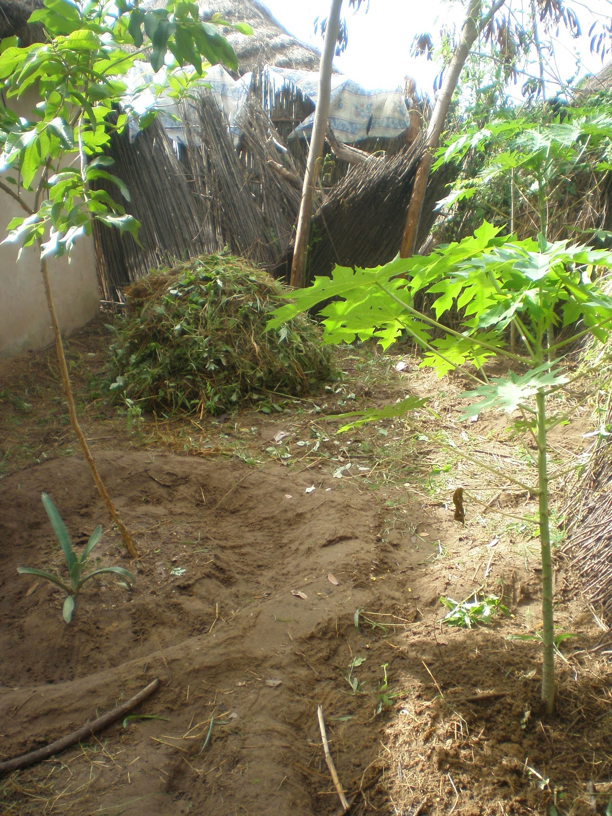 Lorraine\'s Peace Corps Blog: SeneGal in Africa...Sustainable ...