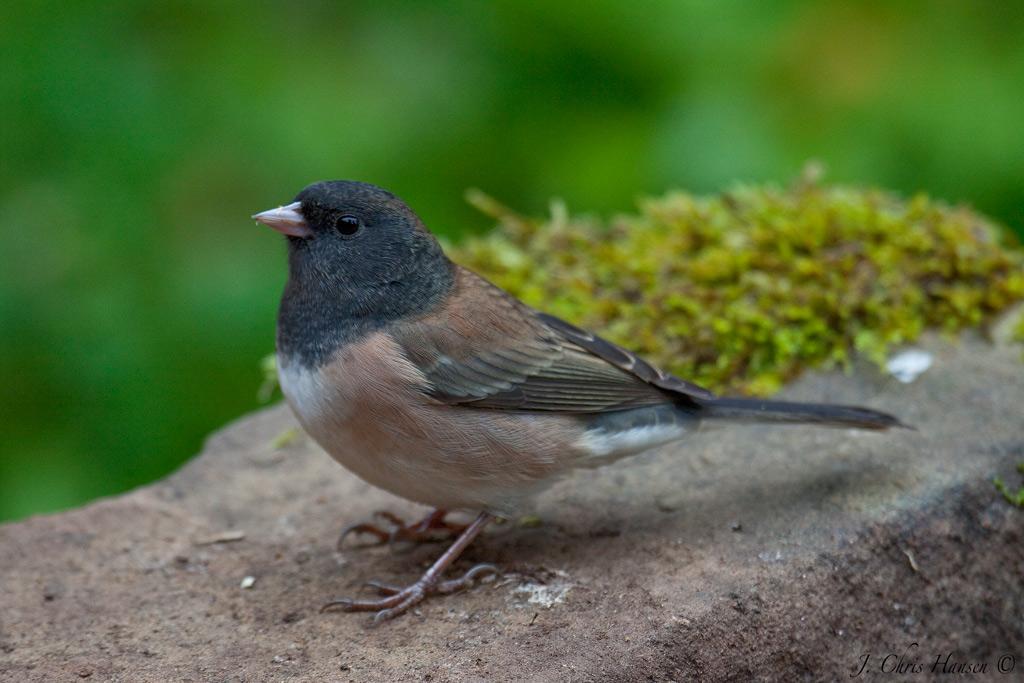 Chris The Photog: Backyard Birds