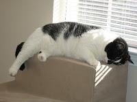 panorâmica gatos
