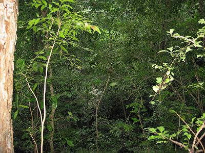 nature tourism Nicaragua