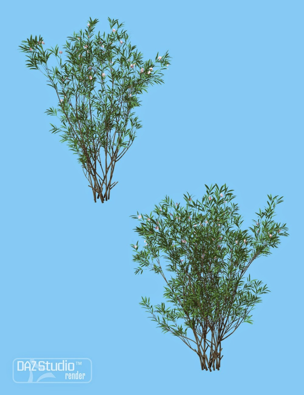Nature - Bush Oleander