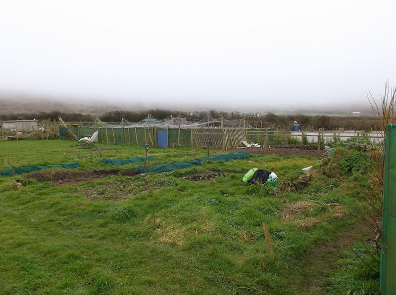 St Ives Cornwall Allotment - 16 March 2014