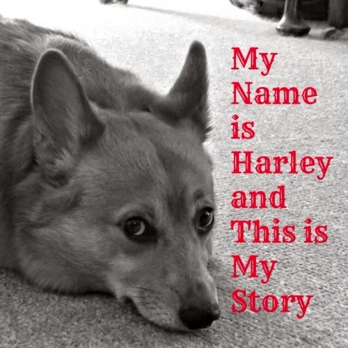 Harley's New book