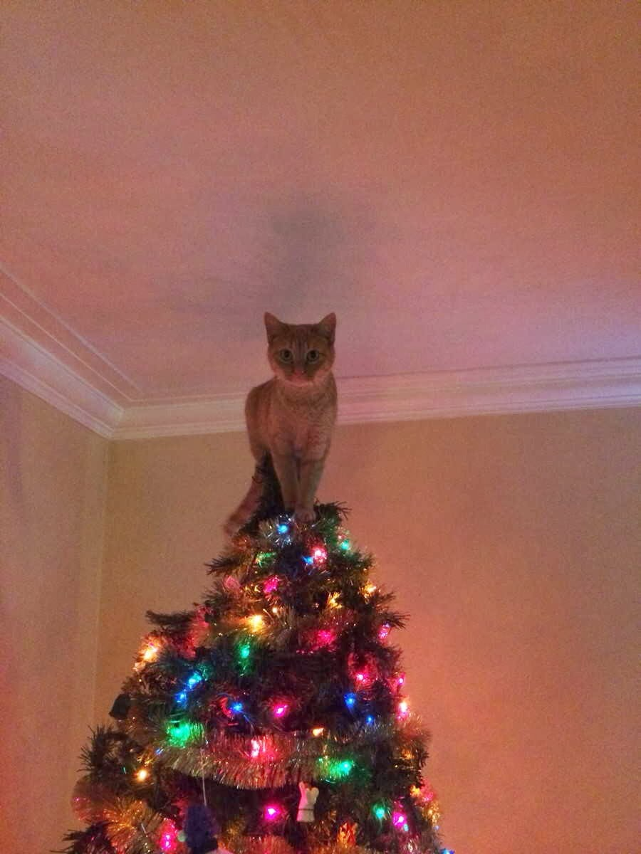 Funny cats - part 83 (40 pics + 10 gifs), cat pics, cat stands on top of christmas tree