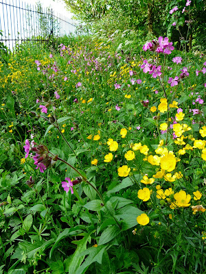 Wildflowers at Greenbank Park