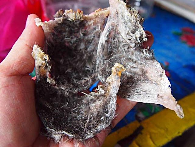 Harvesting bird's nest at Niah National Park, Miri Sarawak