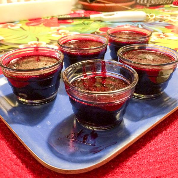 svartvinbärsgelé