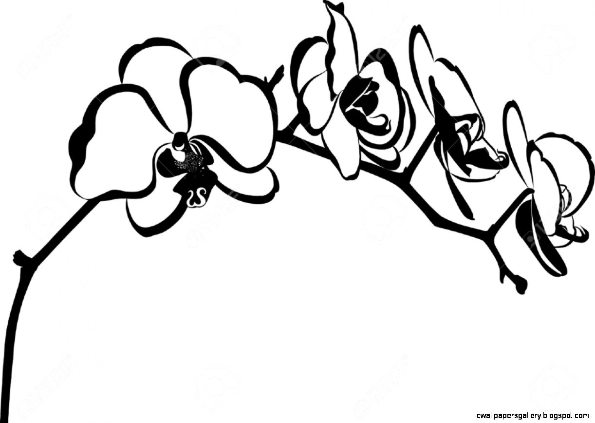 Orchid Flower Branch Vector Isolated Royalty Free Cliparts