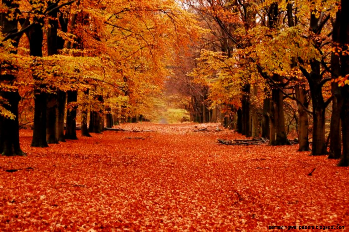 Autumn Orange Leaves – Feup Blog