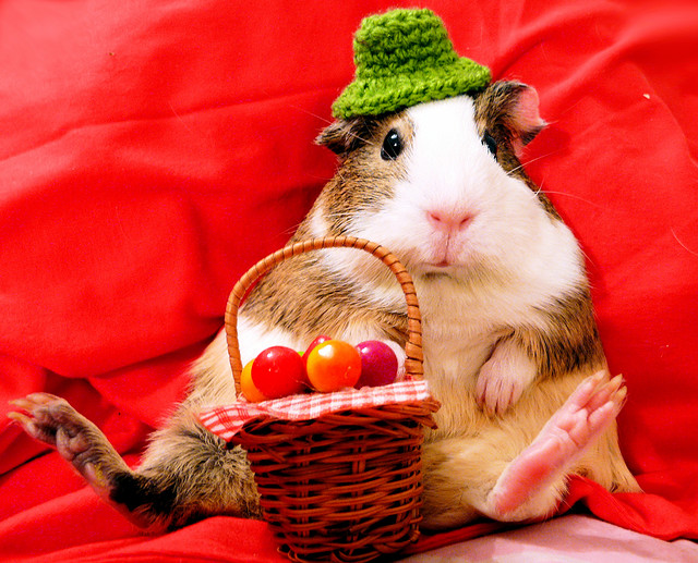 Defying Gravity: Cute Animals dressed up for Christmas Photos