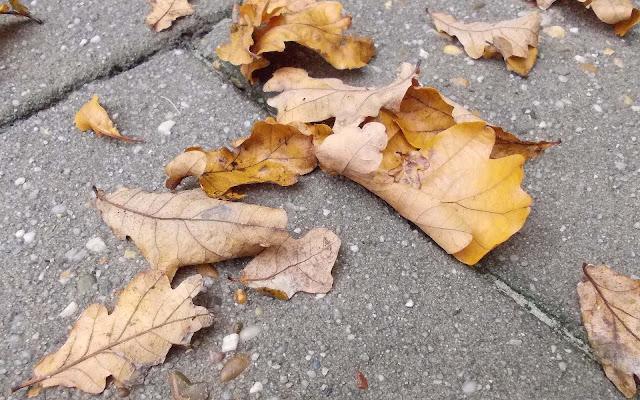 Bladeren op de tegels in de herfst