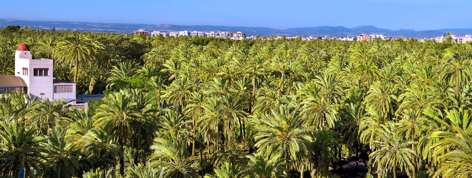A beautiful palm trees sea