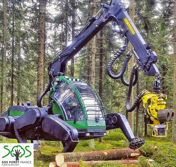 La mauvaise gestion de la forêt entraîne la déforestation