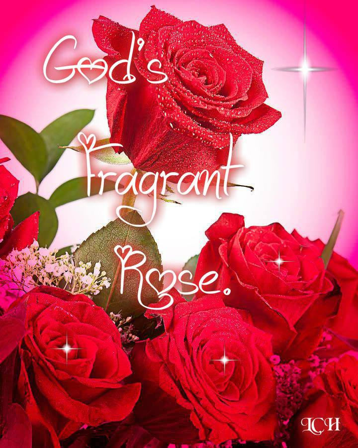 God's Fragrant Rose