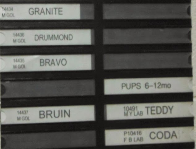 A black sign with clear plastic sleeves to contain white tags with the names of dogs typed on them. The first three on the top left side read Granite, Drummond and Bravo. After a space on that side is the name Bruin. On the right side are three empty spots followed by a tag that reads PUPS 6-12 mo, followed by the names Teddy and Coda.