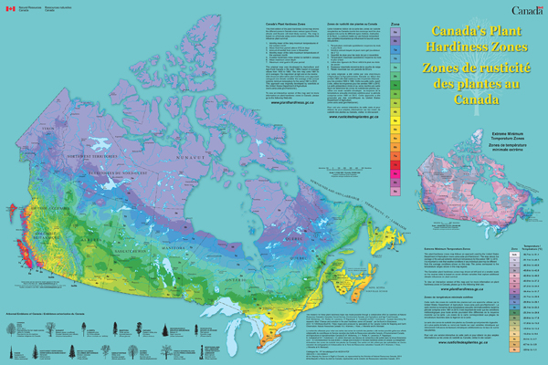 CANADA'S PLANT HARDINESS ZONE MAPS. FIND YOURS!