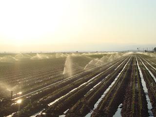 Sprinkler irrigation rice field photo - Sant Carles de La Rápita