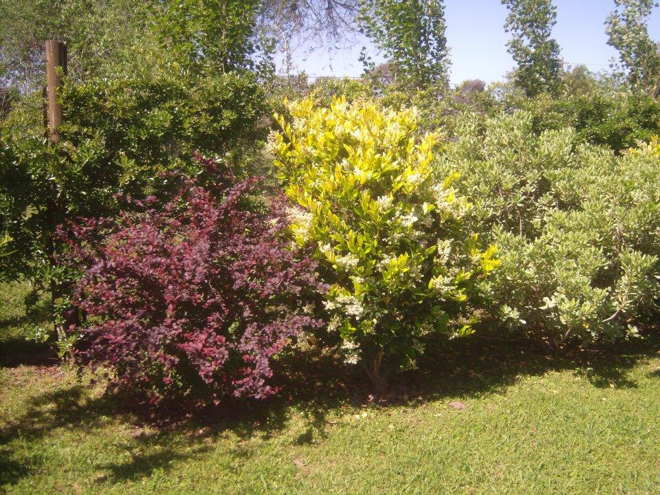 Dise ar canteros las manos en la tierra - Arbustos perennes para jardin ...