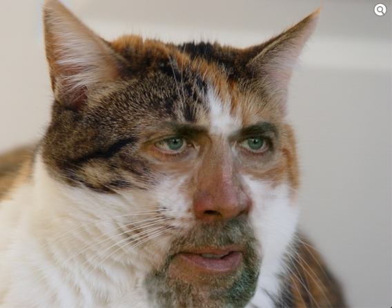 Photoshop Cat Face Photoshop Face Swaps With