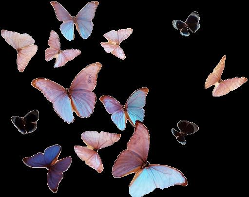 Butterflies Transparent Tumblr butterfly, butterflies - polyvore