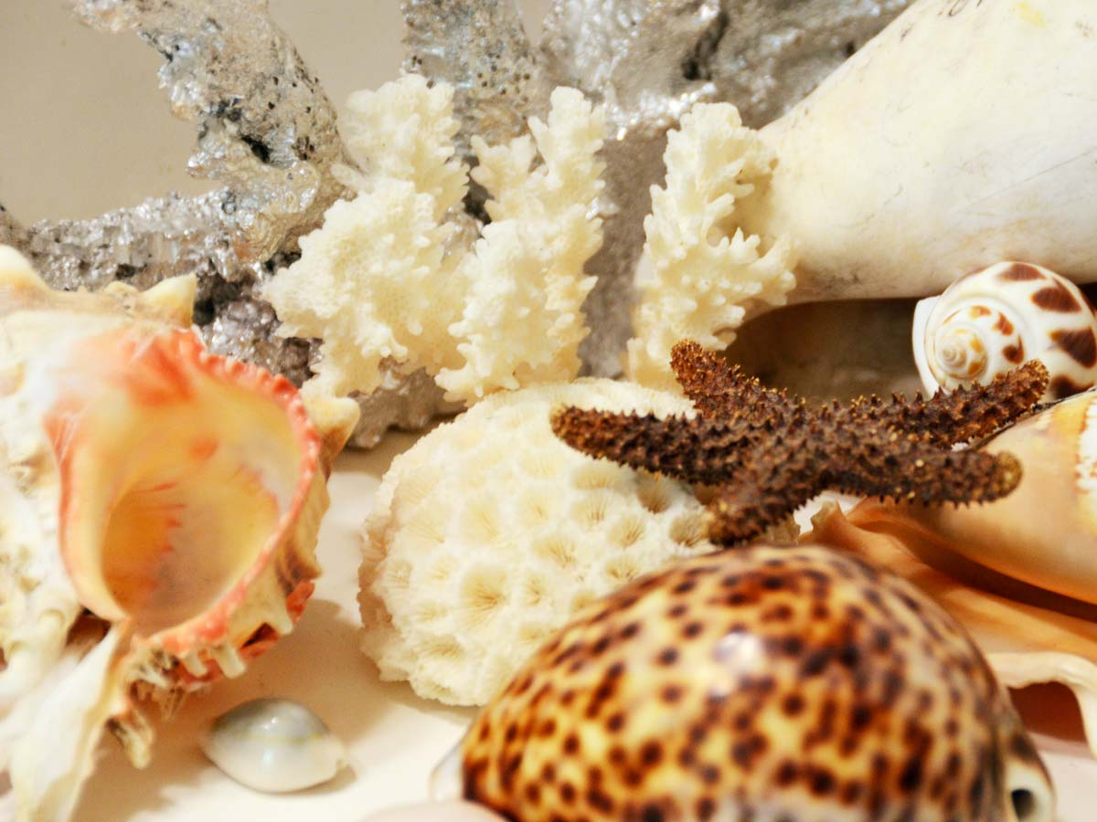 Sea shells and star fish