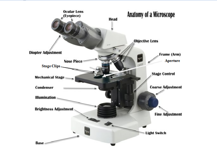 Microscope and Its Parts ~ Marta's Blog