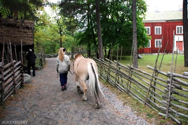 aliciasivert, alicia sivertsson, alicia sivert, skansen, skansens höstmarknad, marknad, höst, market, autumn, horse, norsk fjordhäst, fjording