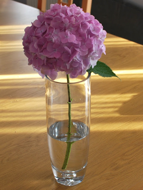 pink hydrangea flower in vase with water