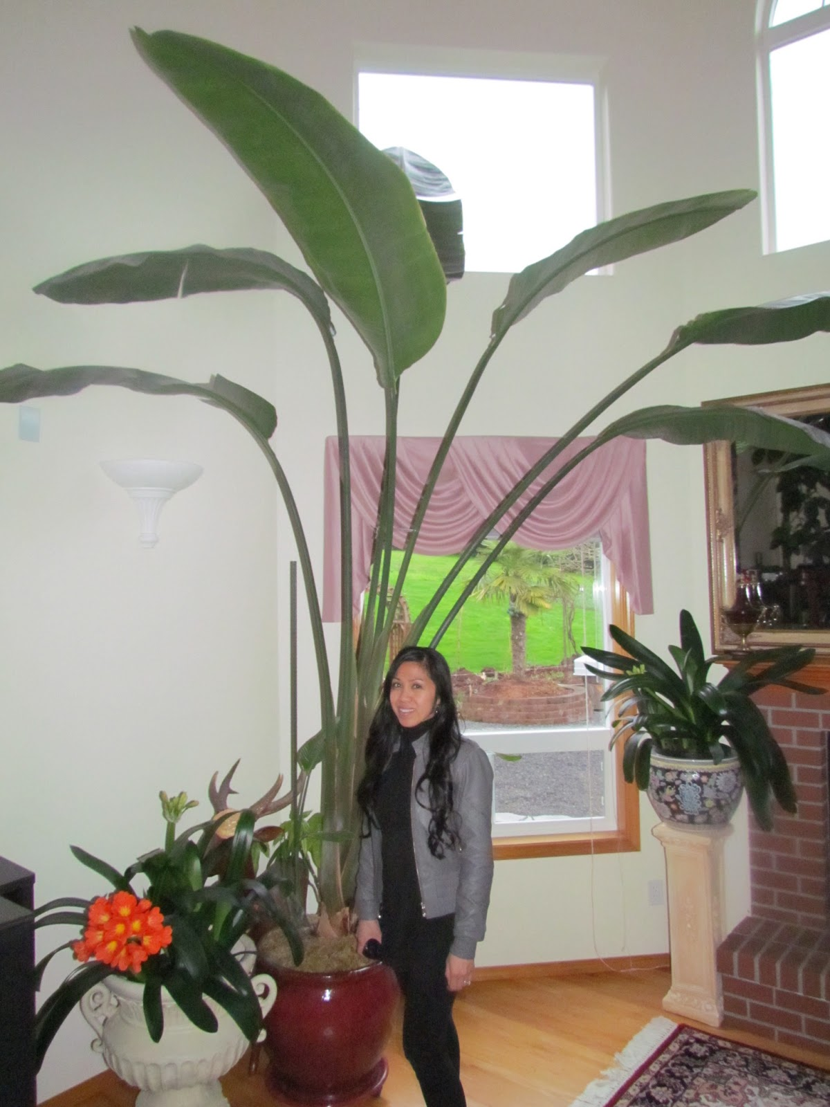 learn to grow giant indoor plants avocado tree and bird