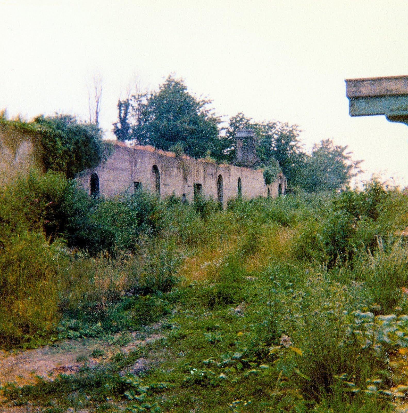 Overgrown trackbed 1970s