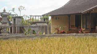 Sewa Rumah Murah Di Ubud Bali Dengan Hamparan Sawah Rumah Kontrak