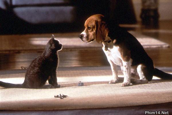Cuộc Chiến Chó Mèo Cats.and.Dogs2