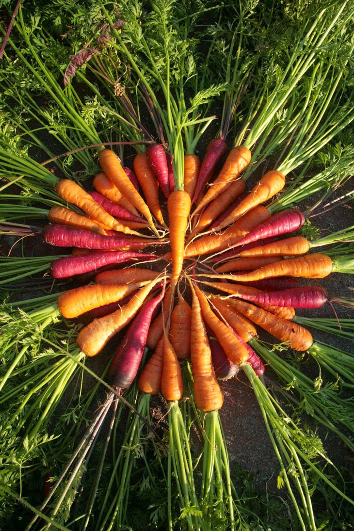 Here's a whole wreath of carrots, pulled from this man's lawn. - He Started With Some Boxes, 60 Days Later, The Neighbors Could Not Believe What He Built