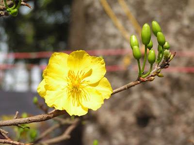 Hoa xuân 2013
