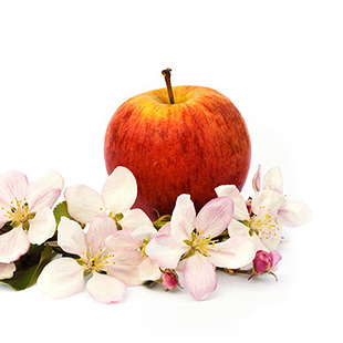 Organic Apple Extract