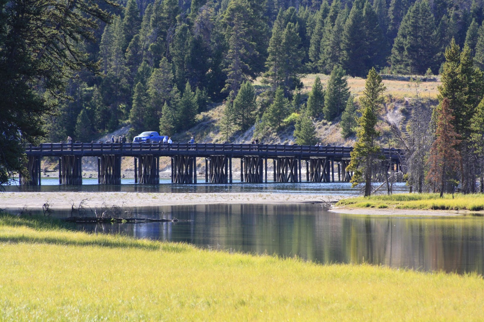 Nomadic newfies yellowstone flashback bison watching for Fishing bridge rv park
