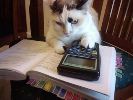Hình ảnh vui Mèo tính toán