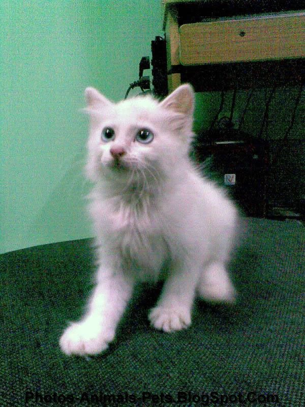 White cat pic