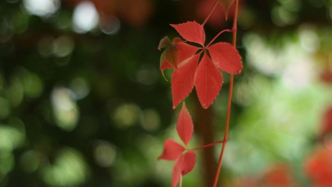 Leaves Macro HD Wallpaper 2