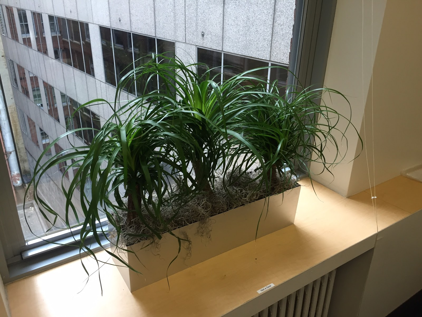 Pdi Plants Blog New Best Discounted Rectangular Planters For Your Interior Office Plantscapes